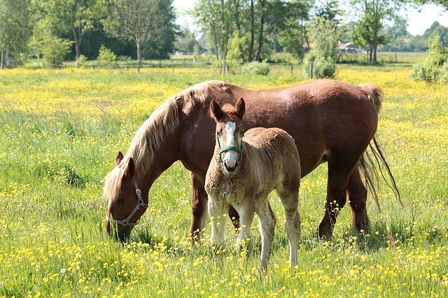 Umweltschutz in der Kulturlandschaft - das Beispiel der Pferdeweiden