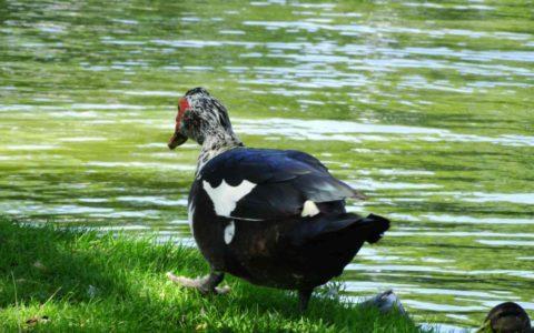 Putenhaltung in Vogelschutzgebiet