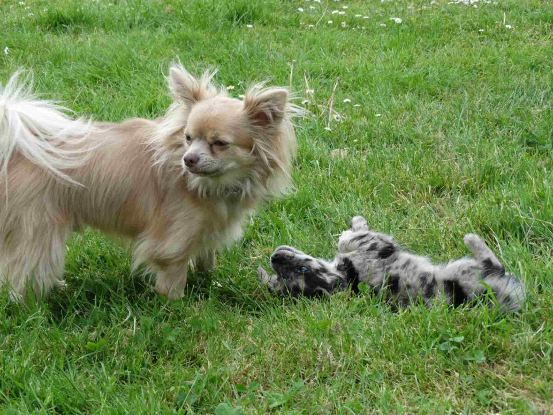 Tierversuchsrichtlinie