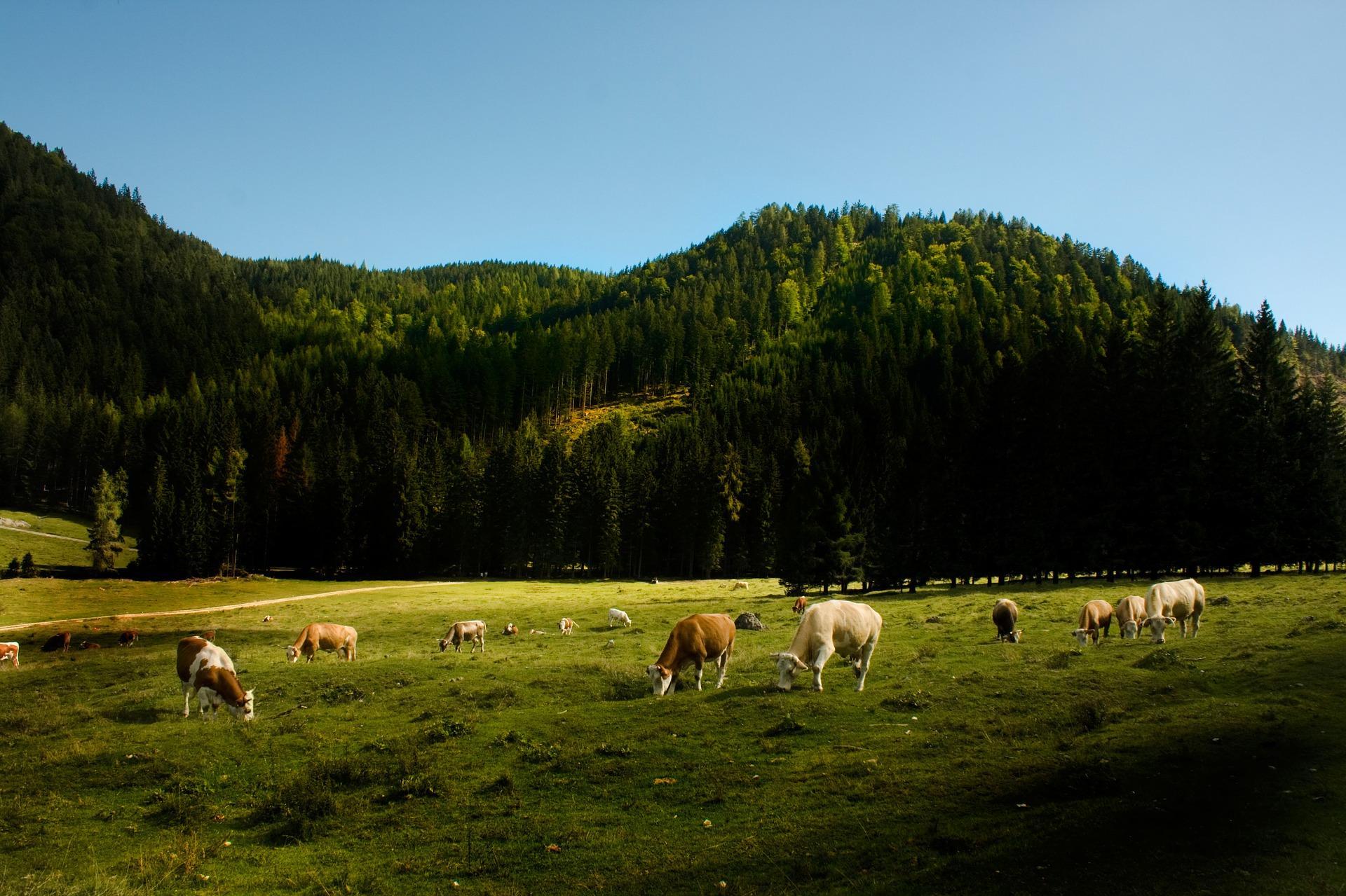 Bodenschutzrecht - und die verfassungsrechtlichen Grenzen der Rückwirkung