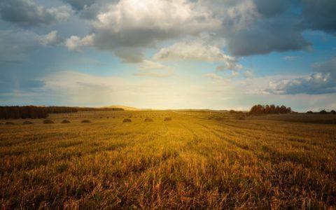 Wanderschäferei - und die Beweidungsleistungen zum Landschaftsschutz