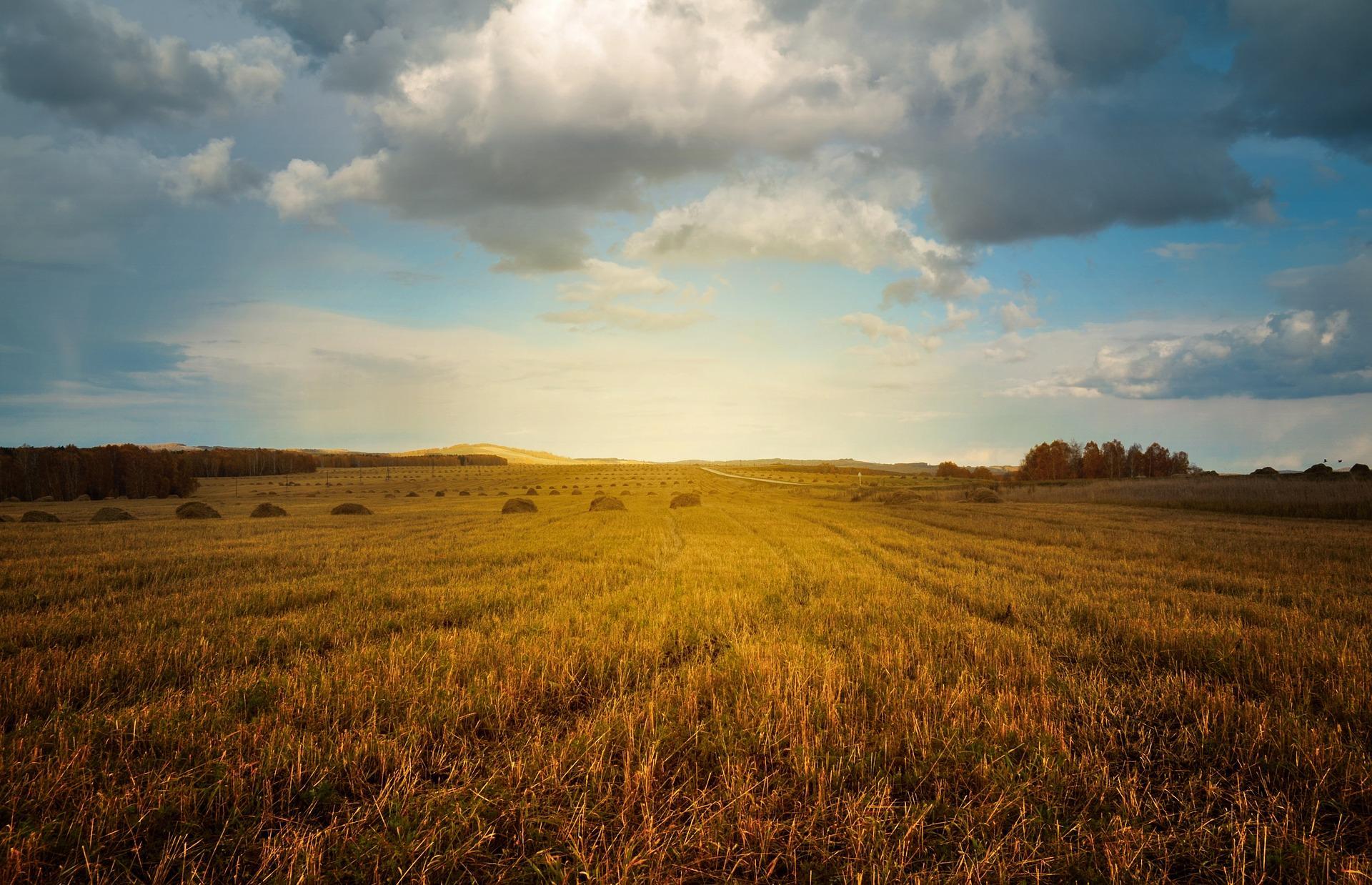 Wanderschäferei – und die Beweidungsleistungen zum Landschaftsschutz