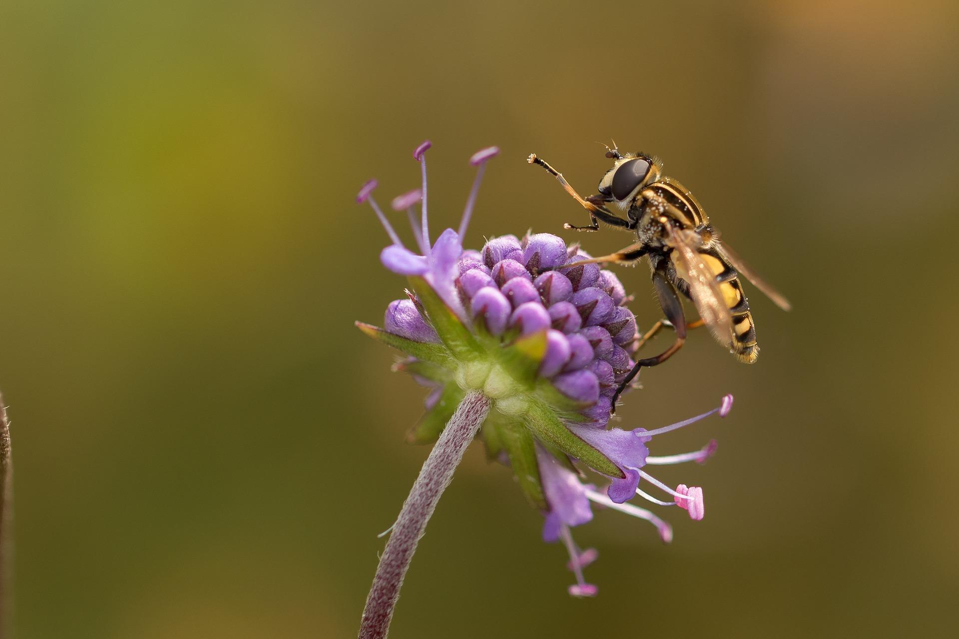 Ökologische Flutungen als Ausgleichsmaßnahme