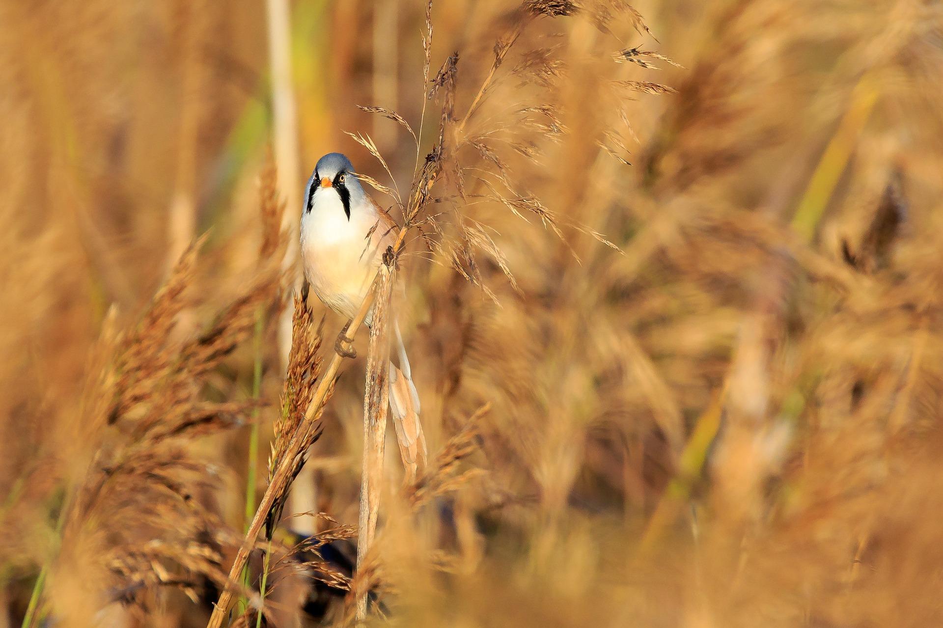 Höchstspannungs-Freileitung im Vogelschutzgebiet