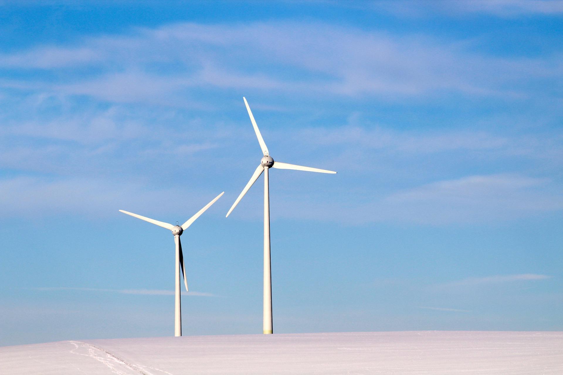 Windkraftanlagen gegen geschützte Tierarten