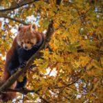 Zwingender Artenschutz und behördlicher Beurteilungsspielraum