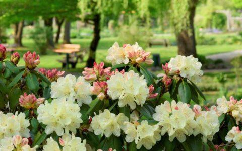 Pflanzenschutzmittel - und das Zulassungserfordernis