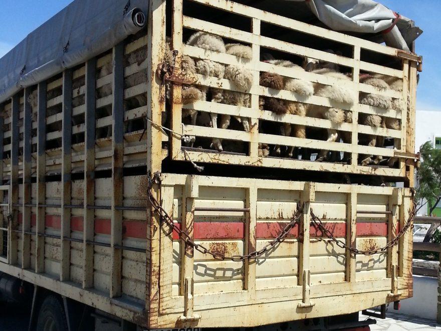 Aufsichtsmaßnahmen bei Tiertransporten – und der Informationszugang